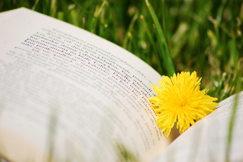 En bog i græsset med en mælkebøtte Bagvrk