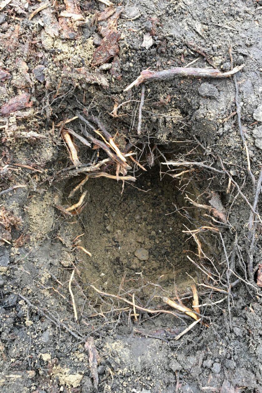 De dybe huller er gravet og savet ned gennem rødderne Bagvrk.dk